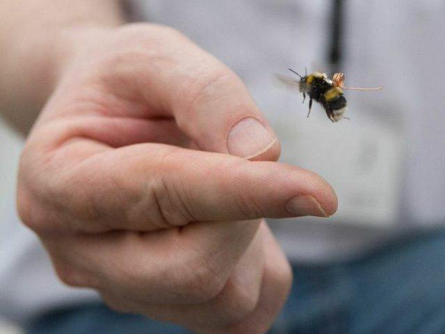 Bee Track 1