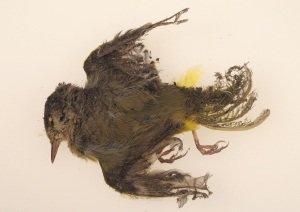 Death Bird Solar