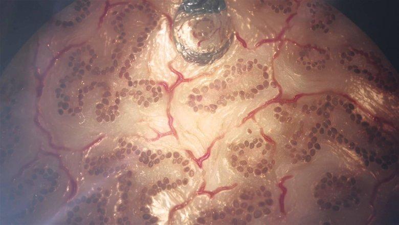 Organovo Vzorek Jaterni Tkane