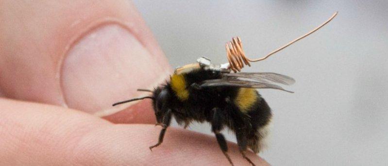 Bee Track