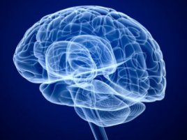 Mozek Dekoder